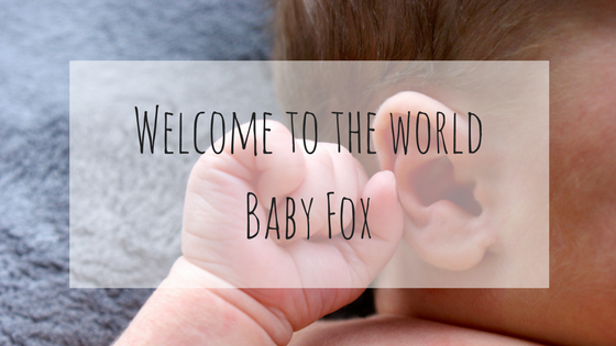 Welcome to the world Baby Fox