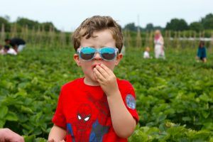 Summer bucket list strawberry picking